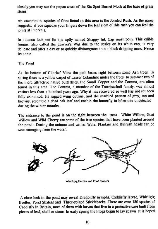 Howardian Local Nature Reserve   Nature Trail Booklet 1996 (English)   The Pond