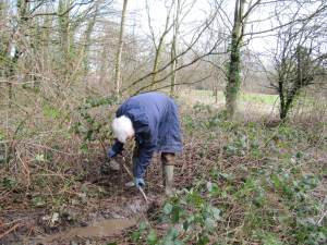 Howardian Local Nature Reserve      Digging drainage ditch