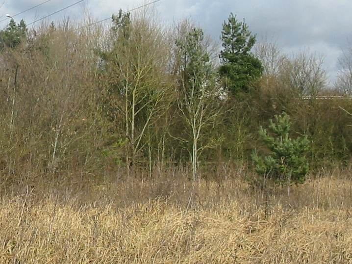 Howardian Local Nature Reserve    North West Corner before Scrub Clearance