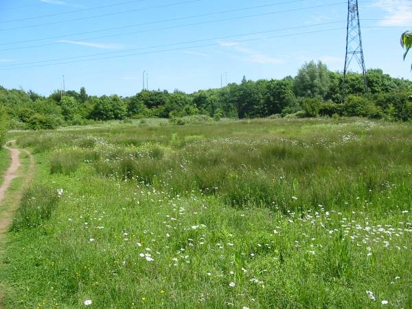 Howardian Local Nature Reserve    Orchid Meadow before cutting
