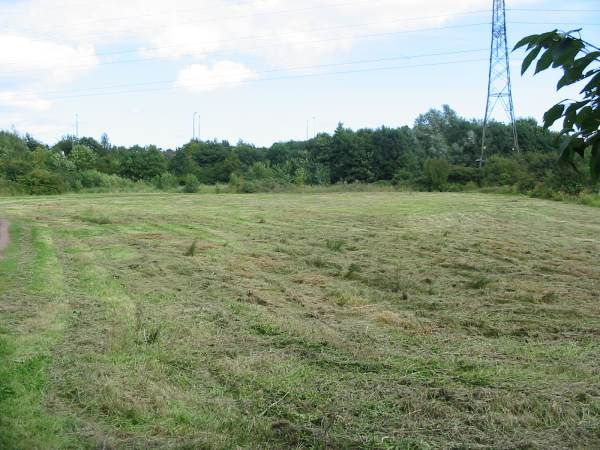 Howardian Local Nature Reserve    Orchid Meadow after cutting