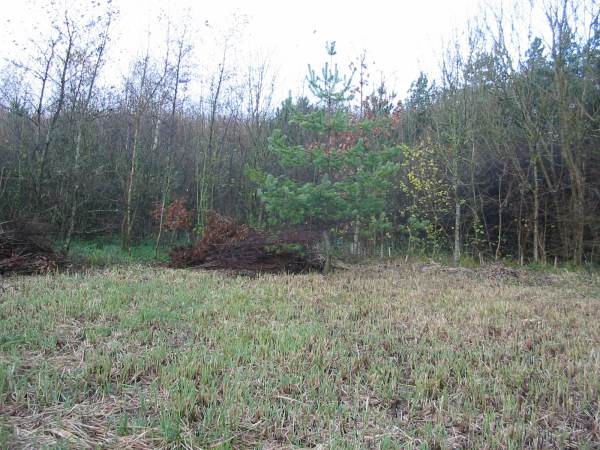 Howardian Local Nature Reserve    North West Corner after Scrub Clearance