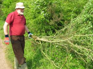 Howardian Local Nature Reserve    thinning