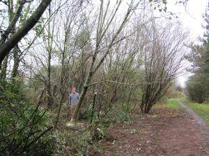 Howardian Local Nature Reserve   Thinning of trees