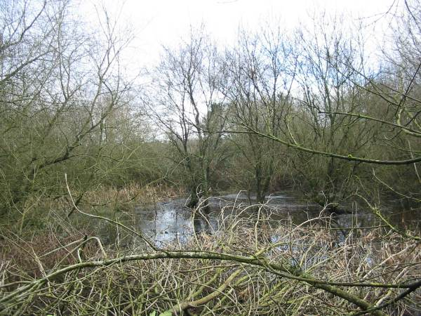 Howardian Local Nature Reserve    Wetland after thinning looking East