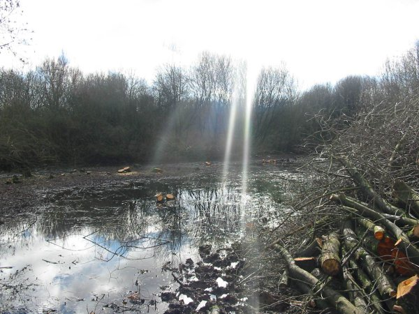 Howardian Local Nature Reserve   Wetland before thinning