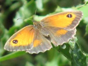 Gatekeeper (Female)