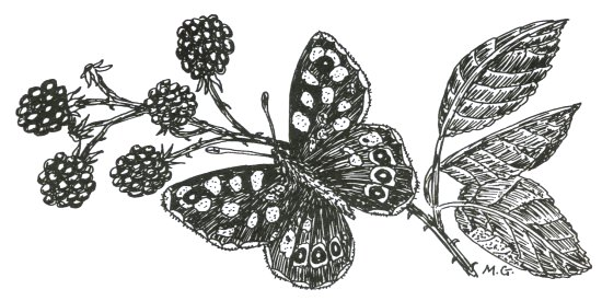 Howardian Local Nature Reserve Motif