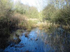 Howardian Local Nature Reserve   Winter Wetland