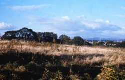 Howardian Local Nature Reserve 1974