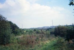 Howardian Local Nature Reserve 1994