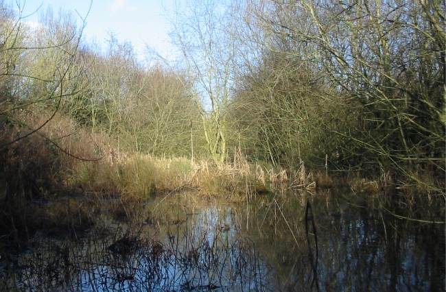 Howardian Local Nature Reserve 2009