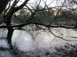 Iced Winter wetland at Dawn
