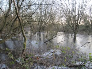 Ice on Winter Wetland