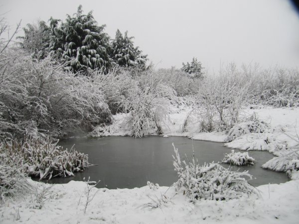 Howardian Local Nature Reserve Snow Jan 2013