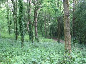 Howardian Local Nature Reserve Woodland